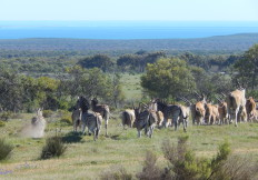 Wildlife on the Cape West Coast